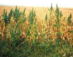 is cbd oil legal in south dakota 2019
